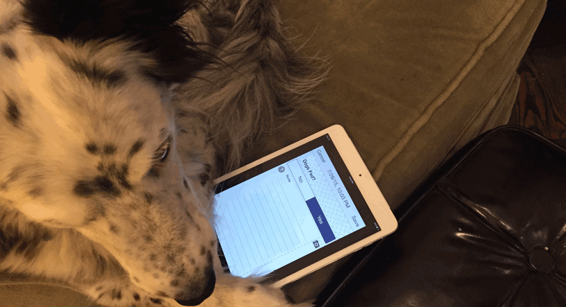 dog creating a record with logcheck