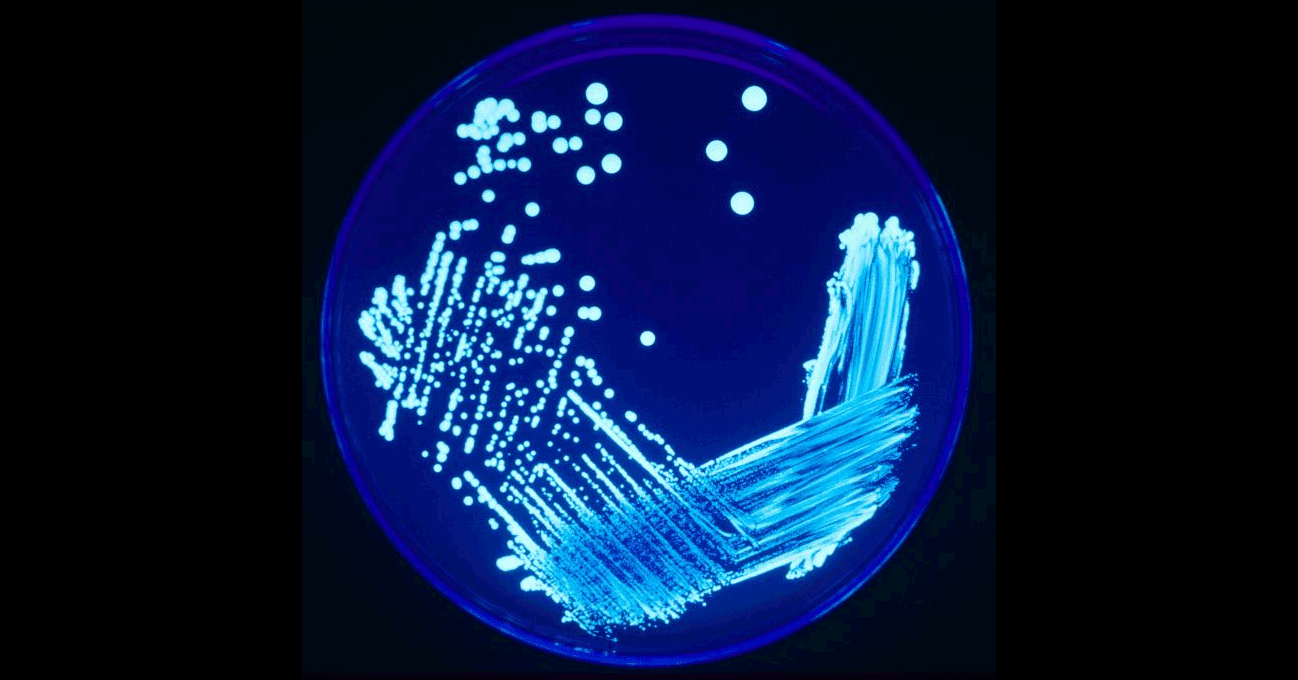 Reminder: New York Legionella Rules Start March 1st