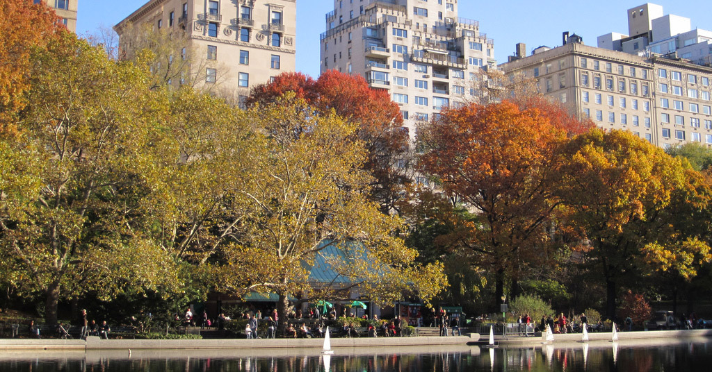 foliage along the water in the city