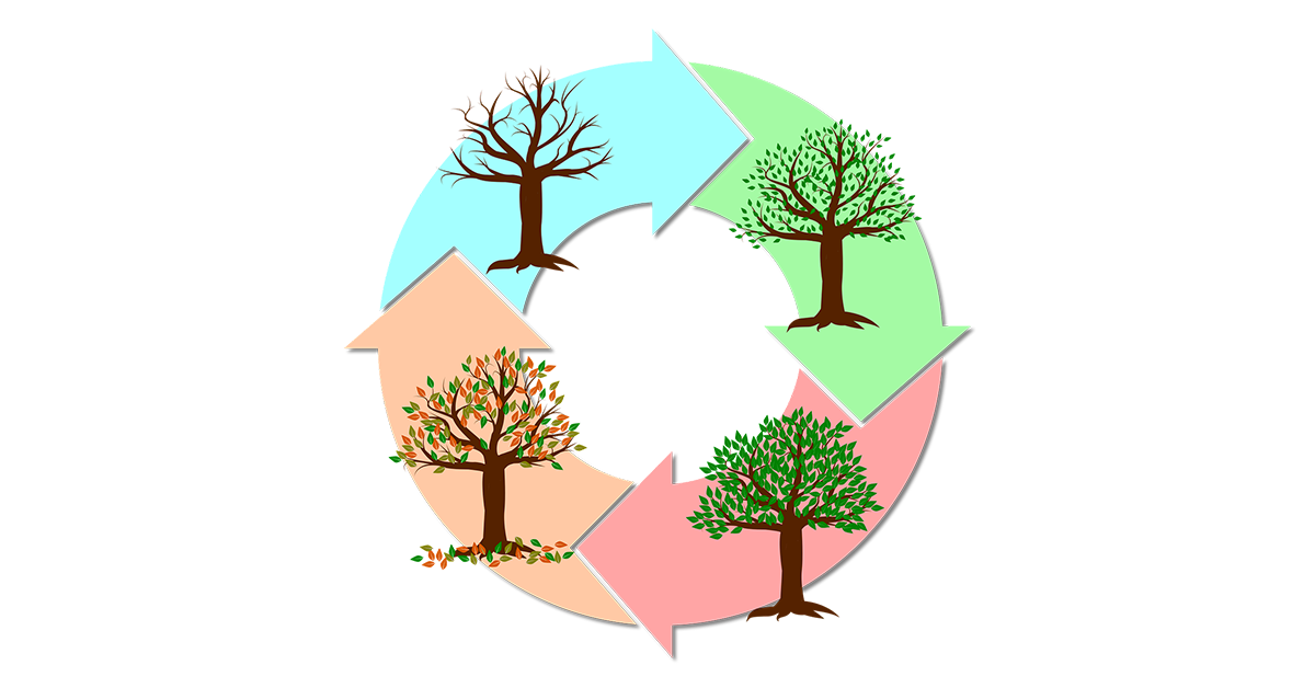 seasonal cycle of a tree